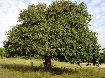 arbre_400x300.jpg